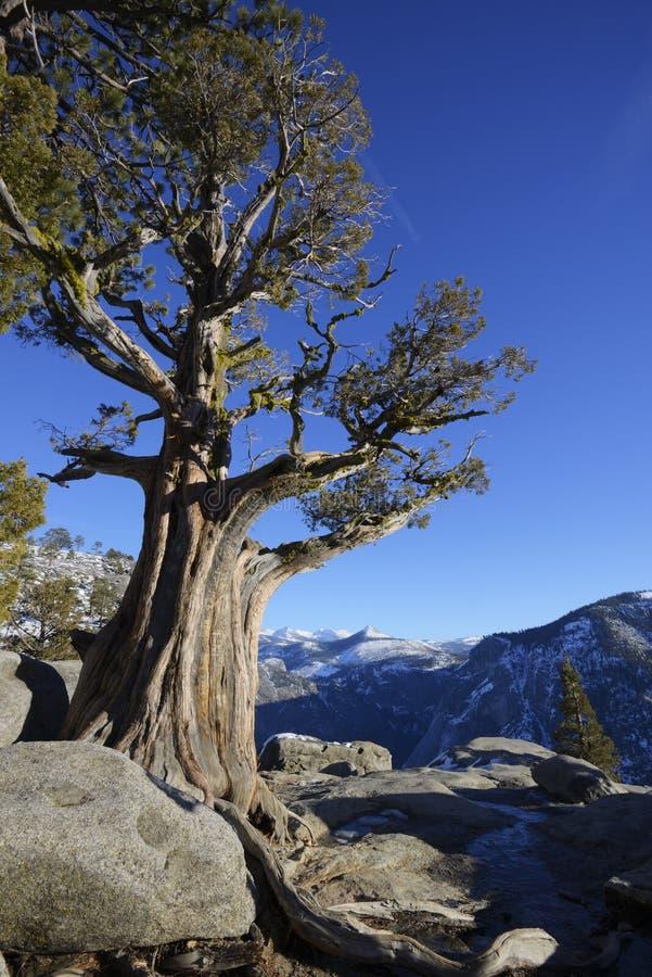 Yosemite Falls donnent sur image stock