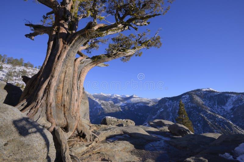 Yosemite Falls donnent sur photo stock