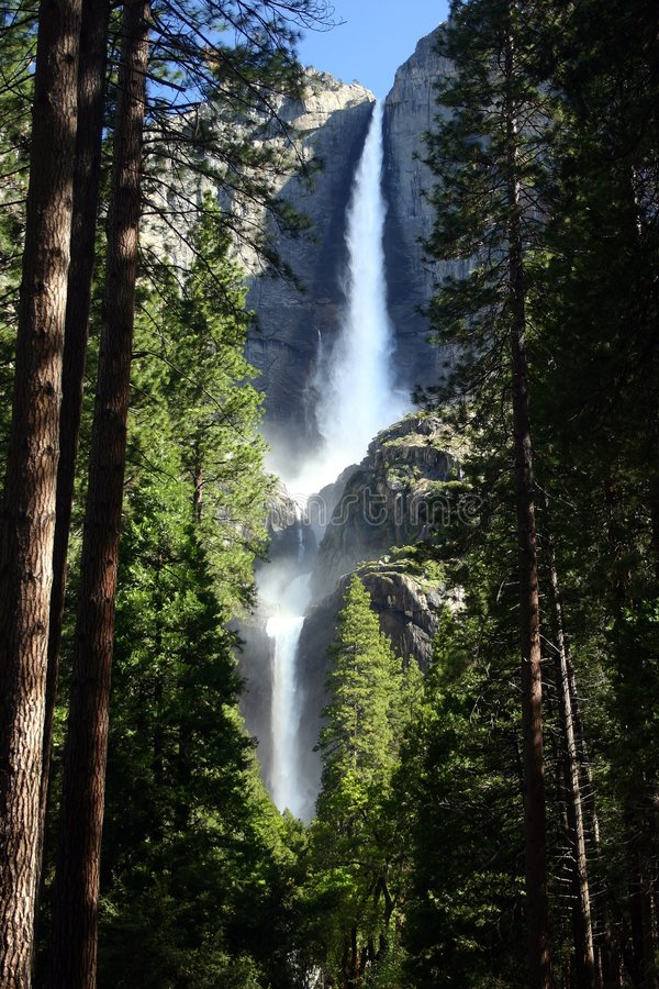 Yosemite Falls e floresta fotografia de stock