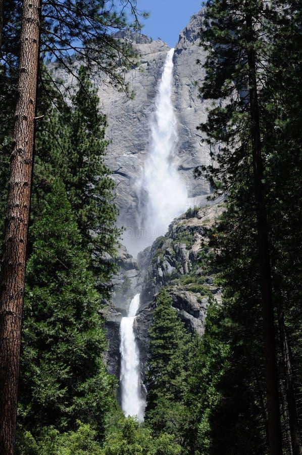 Yosemite Falls fra gli alberi immagine stock