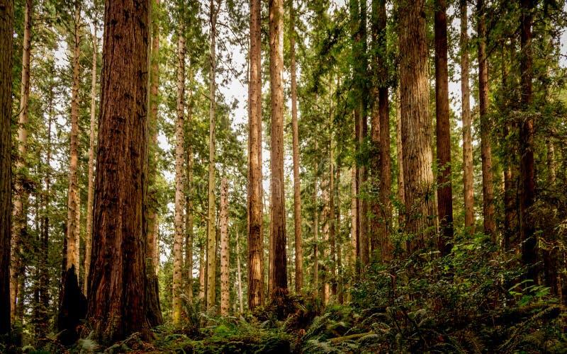 Yosemite liści jesienią obrazy stock