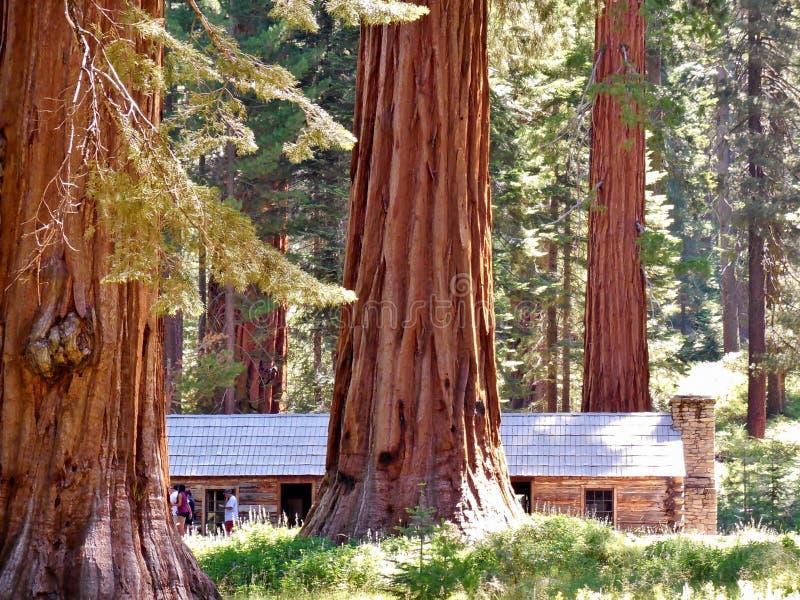 Yosemite liści jesienią zdjęcie stock