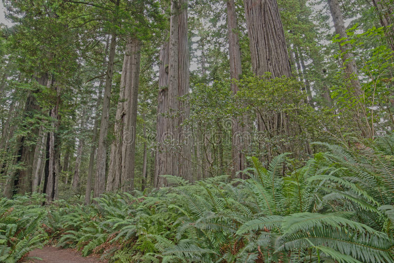 Yosemite liści jesienią fotografia royalty free