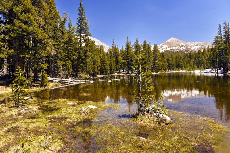 Yosemite nationalpark fotografering för bildbyråer