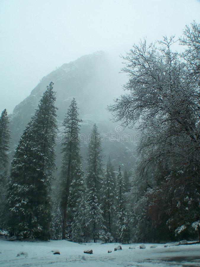 Yosemite park in sow. stock images