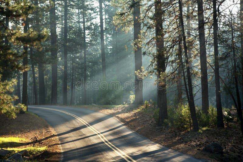 Yosemite sunlight stock photography