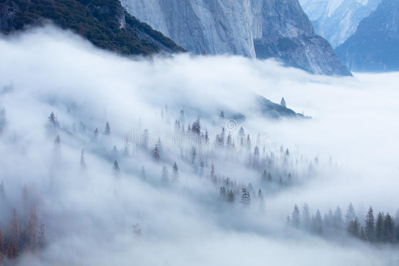 Yosemite Trees in Fog stock images