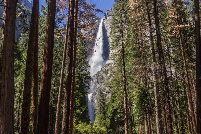 Yosemite vattenfall fotografering för bildbyråer