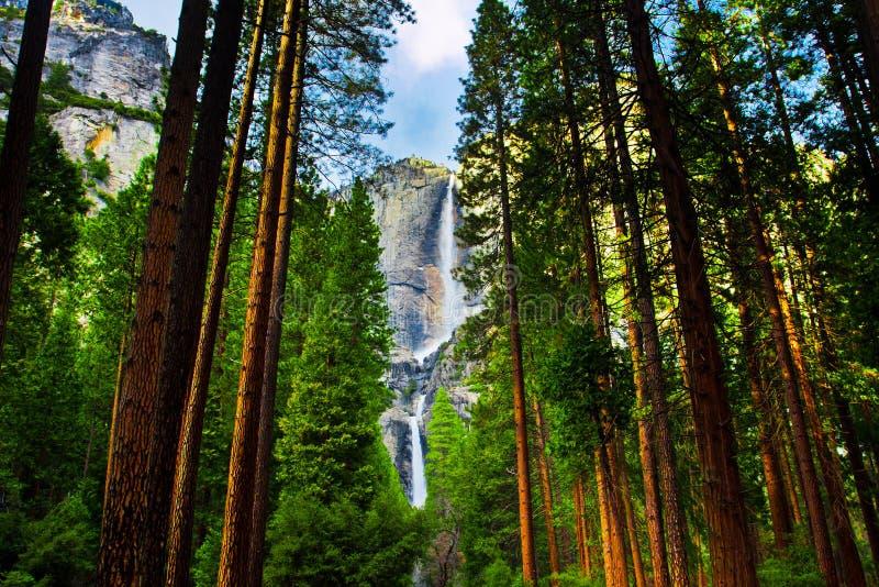 Yosemite Waterfalls behind Sequoias in Yosemite National Park,California royalty free stock photos