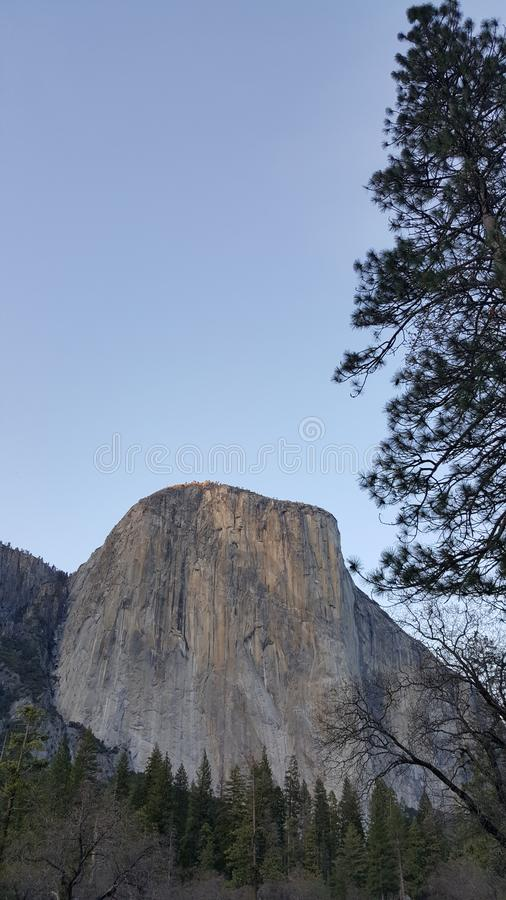 Yosemitevallei in al zijn glorie - Gr Capitan met Pijnboomboom stock foto's