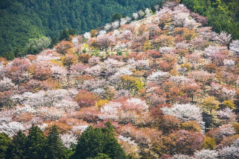 Yoshinoyama Giappone immagini stock