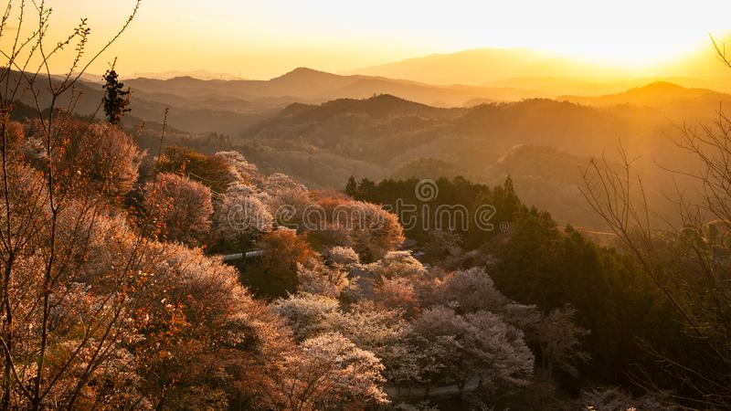 Yoshinoyama, Japan im Fr?hjahr stockfoto