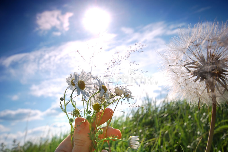 'For you...'. Little hand holding spring flowers in meadow scenery royalty free stock photography