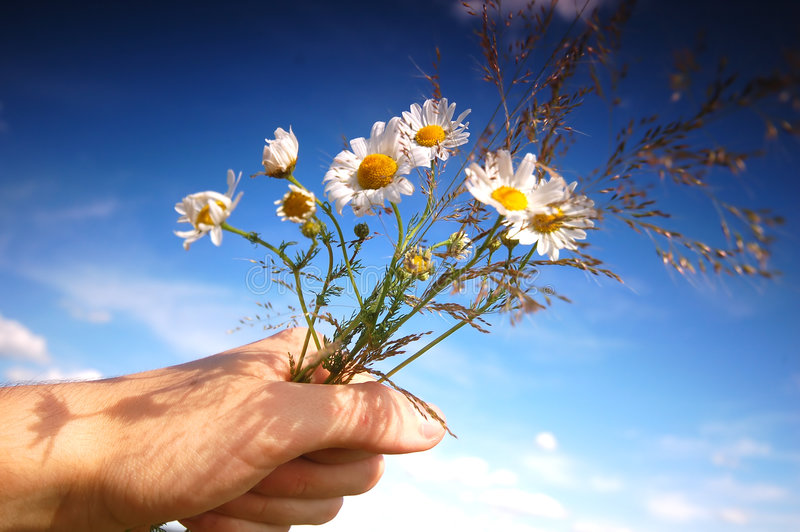 Download 'For you...' stock image. Image of growth, gift, fresh - 2682503