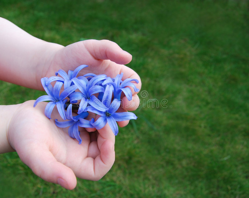 Download For you 3 stock image. Image of petals, spring, toddler - 4737301