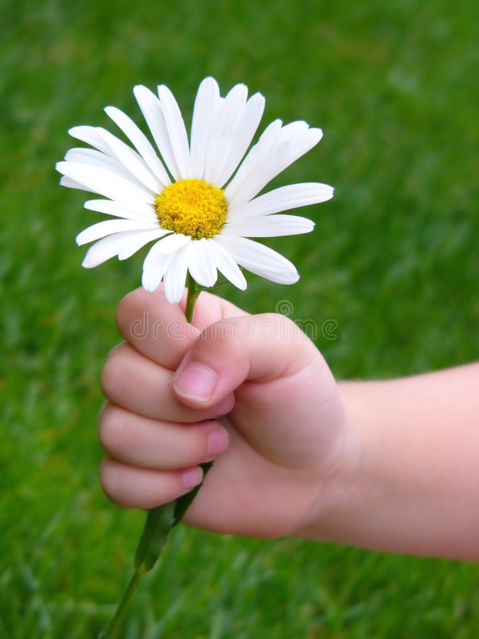 For you. Childs hand holding out a daisy for you! Soft focus