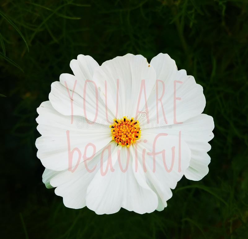 You are Beautiful royalty free stock photography