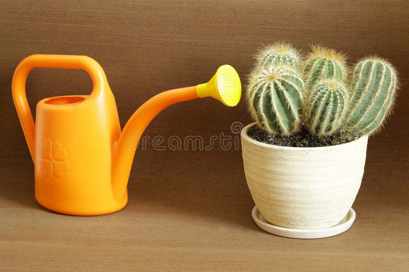 You can lead horse to water but you can`t make him drink. Proverb, of cactus and water royalty free stock photo