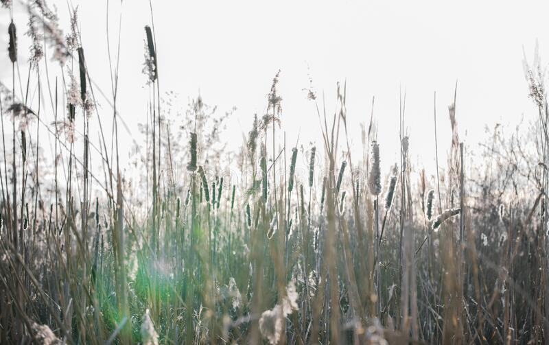 Blades of grass with captured sunbeam. You can see an beautiful blades of grass with captured evening sunbeam royalty free stock photography