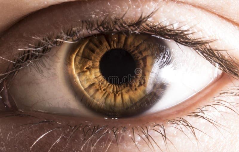 Iridescence of the eye royalty free stock photo