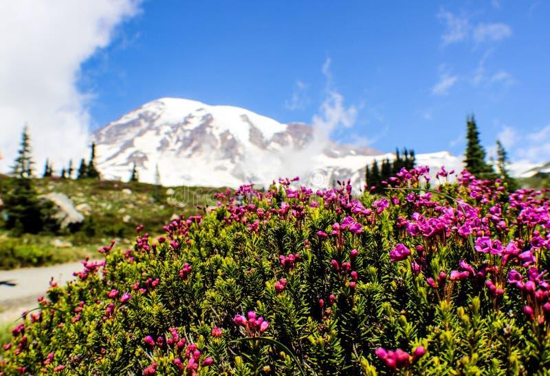 Mount rainier in Seattle Washington state stock images