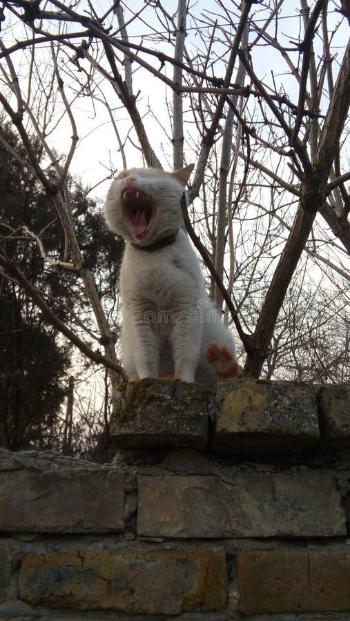 You gonna hear me roar stock image