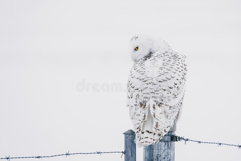 Are you looking at me? royalty free stock photos