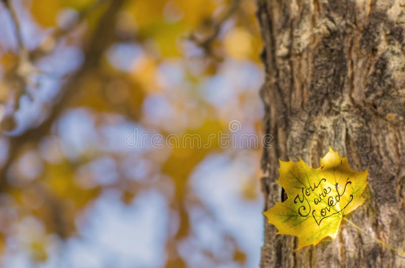 You Are Loved. A Leaf With The Words You Are Loved Written On It On A Tree Trunk royalty free stock image