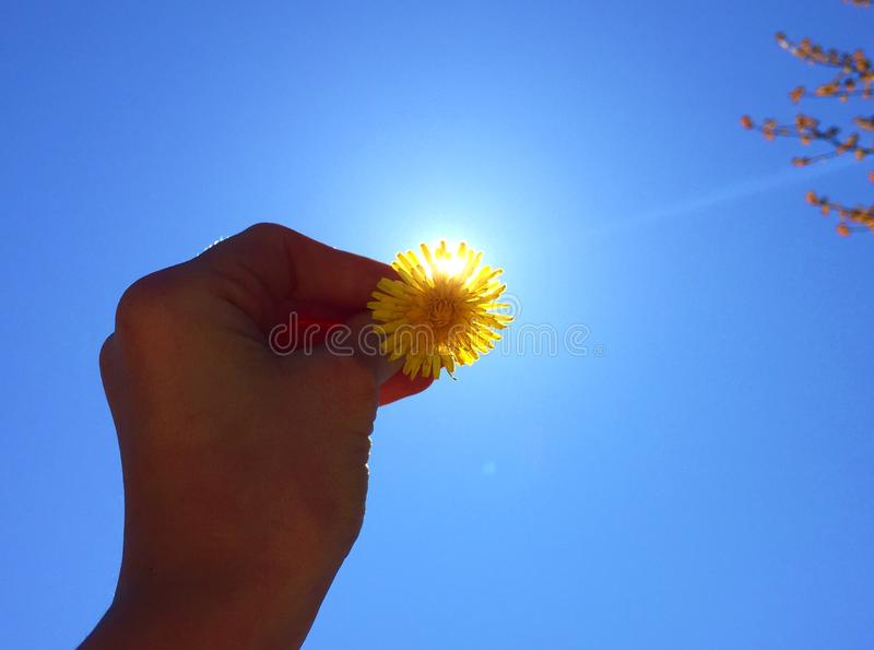 You are my sunshine :) royalty free stock image