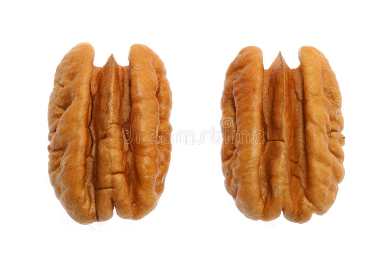 Download Are you nuts? stock image. Image of closeup, season, ingredient - 10190655