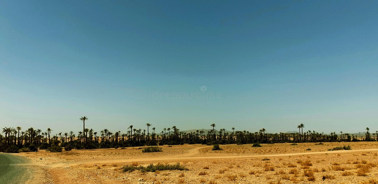 High Palm Oasis royalty free stock images