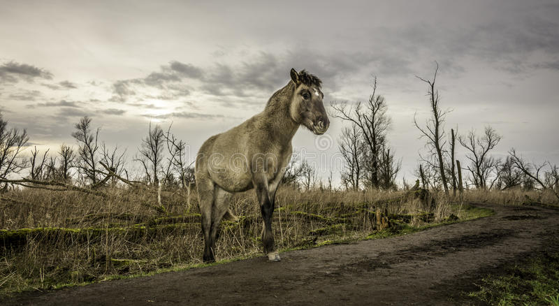 A yound horse walking around in winter wasteland. stock photo