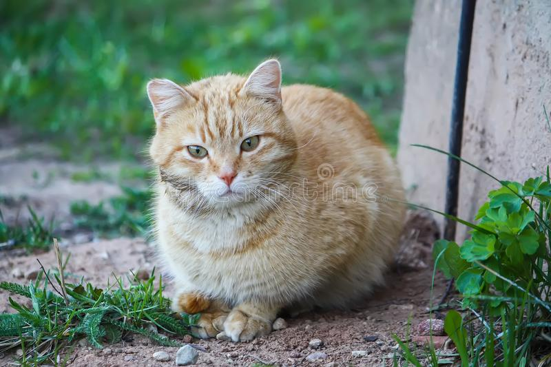 Young active cat with green eyes on summer grass background in a country yard. royalty free stock photography