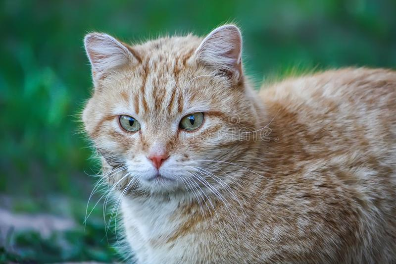 Young active cat with green eyes on summer grass background in a country yard. stock photo