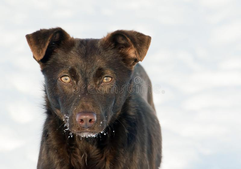 Young active dog outdoors on snow background. stock image