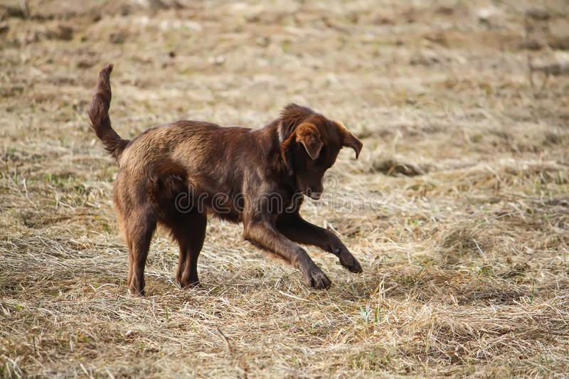 Young active dog outdoors. stock images