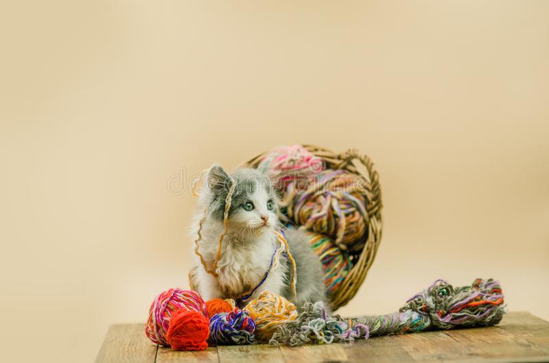 Little funny kitten with a ball of knitting in multiple colors. stock images