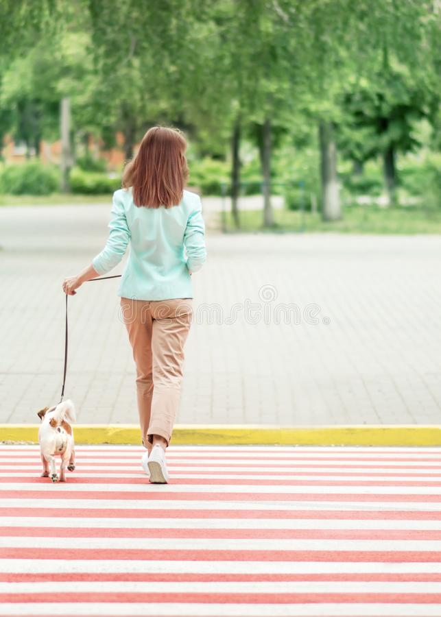 Young adult woman crossing street on crosswalk with small dog jack russel terrier at summer day. Female walking with her royalty free stock photo