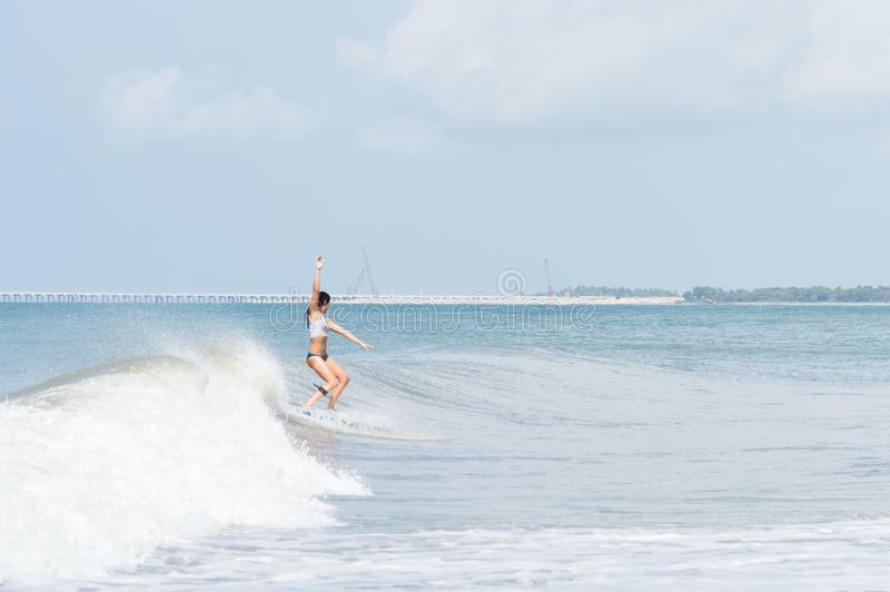 Young adult woman surfing royalty free stock images