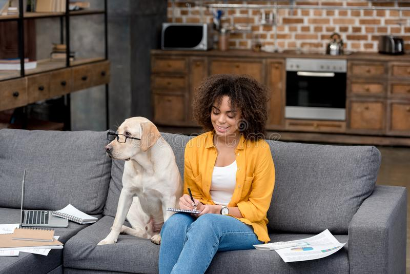 young african american woman working at home on couch while her dog sitting beside royalty free stock images