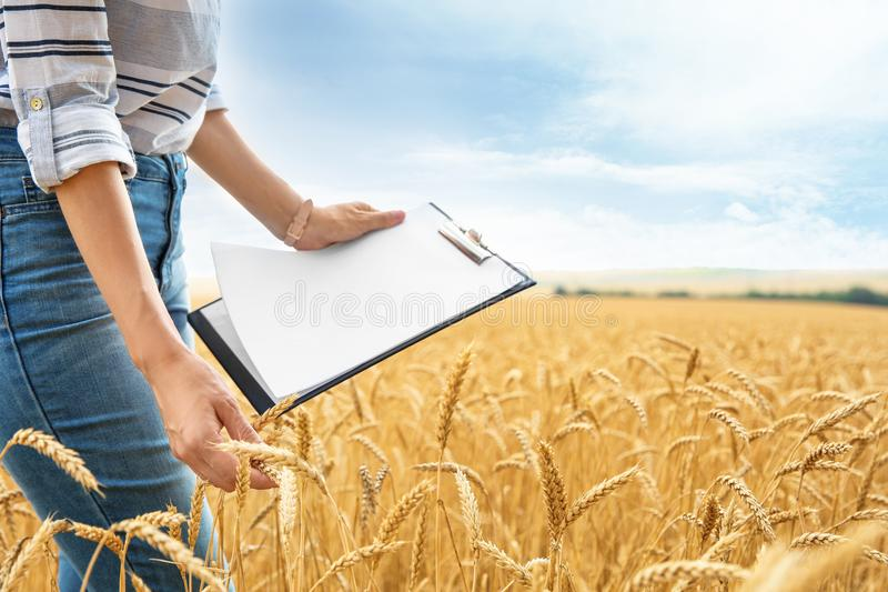 Young agronomist with clipboard in grain field. Cereal farming stock images