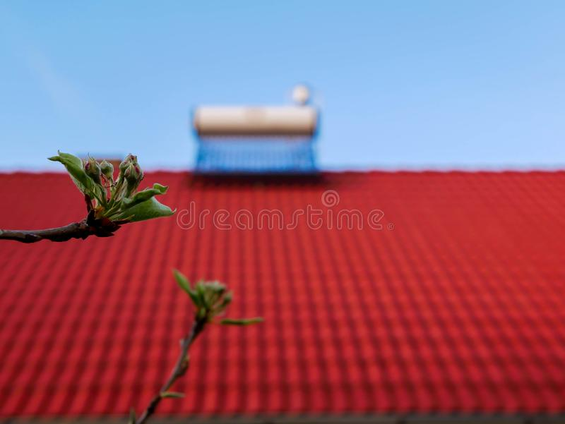 Young apple leaves on focus, solar water heater boiler on rooftop on the blured background. Conceptual image of green house royalty free stock images