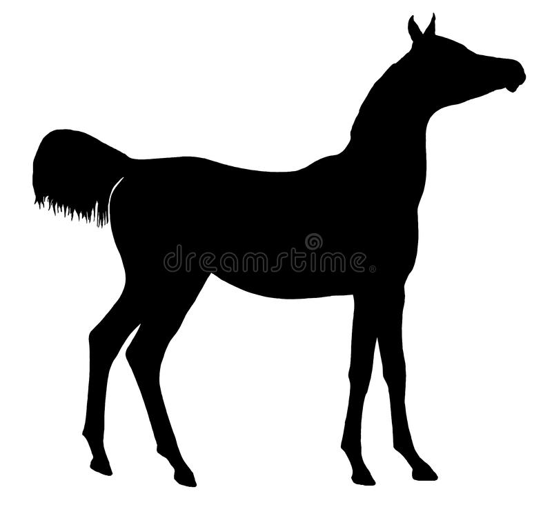 Horse Silhouette Isolated stock photos