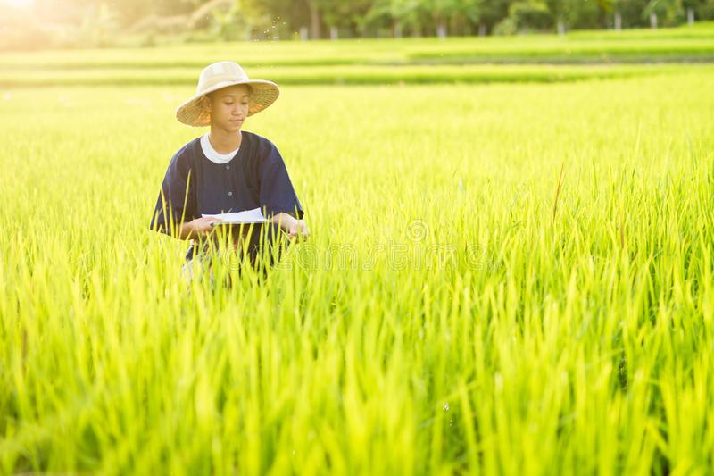 Happy farmer in middle green organic rice farm royalty free stock image