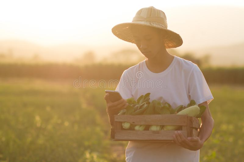 Young asian farmer using mobile phone to contact his customer while carrying a basket of fresh vegetable royalty free stock photos