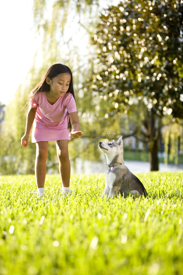 Young Asian girl training puppy to sit. Pretty young Asian girl training Alaskan Klee Kai puppy to sit stock photography