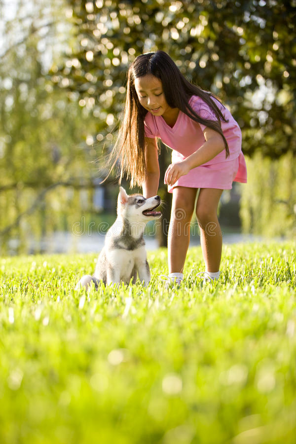 Young Asian girl training puppy to sit. Pretty young Asian girl training Alaskan Klee Kai puppy to sit royalty free stock images