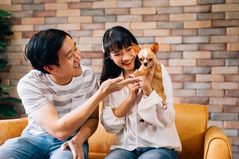 Young Asian male and female pet owners play with Chihuahua dog at indoors home royalty free stock images