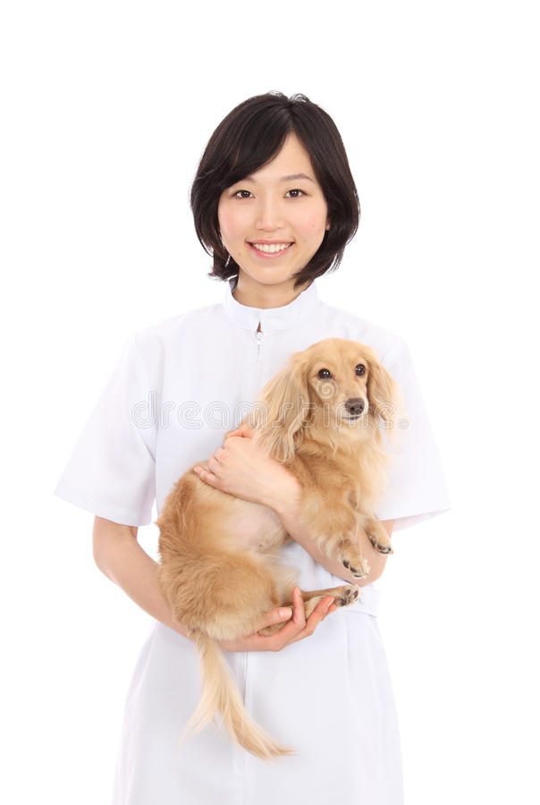 Young Asian women with dachshund royalty free stock photography