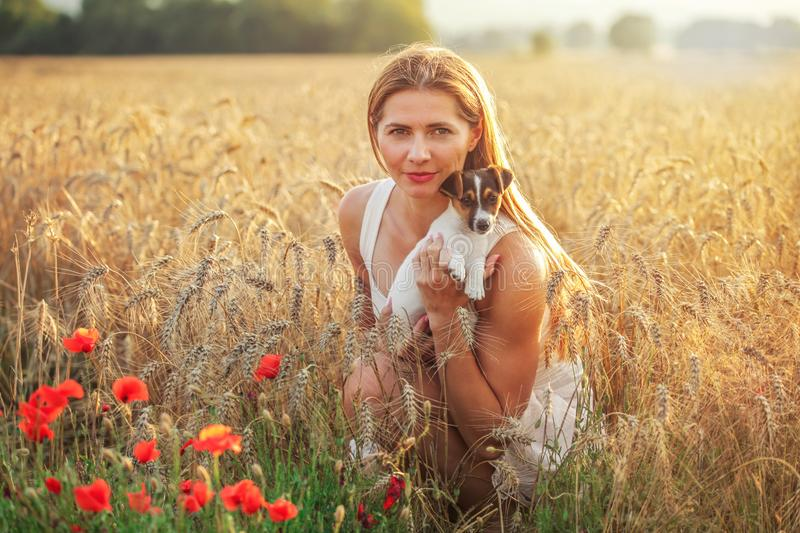 Young athletic woman, kneeling, holding Jack Russell terrier puppy on her hands, some red poppy in foreground and sunset lit wheat. Field background stock image
